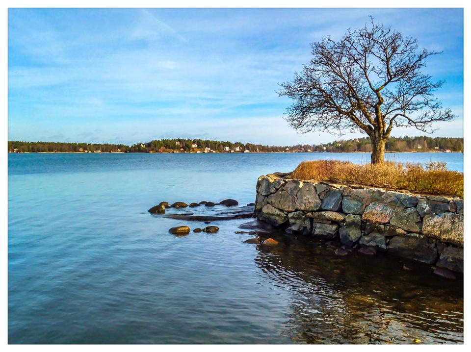 Lonely tree. Vaxholm