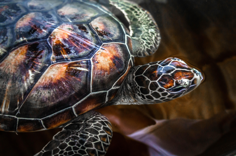 Shelter for damaged turtles