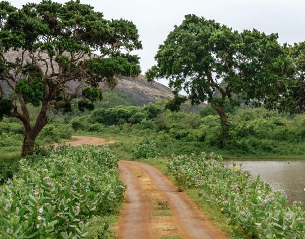 Yala National Park: On Safari in Sri Lanka