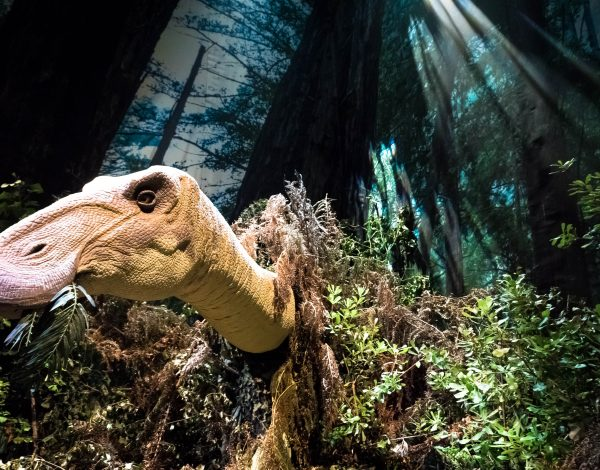 Walking With Dinosaurs at the Eden Project