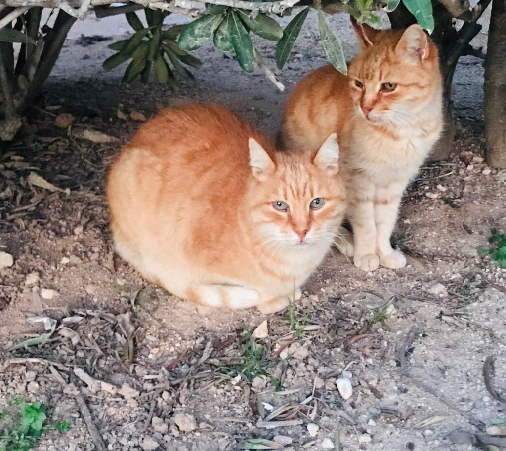 Cats in Malta